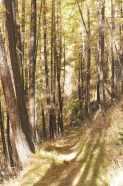 21 Woodland path