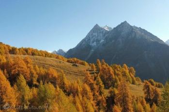 22 Autumn colours