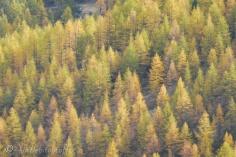 23 Autumn trees
