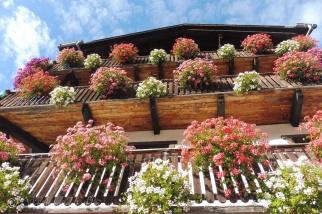 27 Hotel flowers