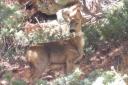 3 Roe Deer