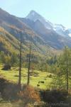4 Alpine meadow