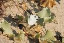 9 Bath White butterfly