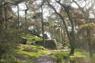 10 Woodland scene