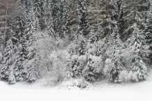 19 Snowy trees