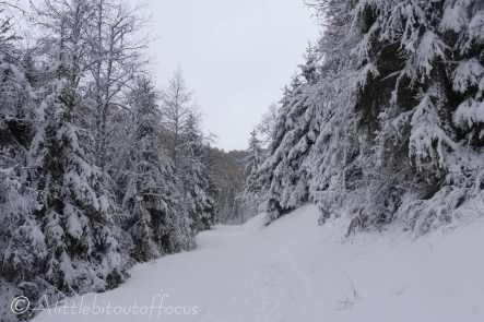 20 Snowy track