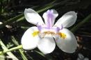 10 Flower