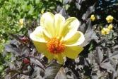 17 Flower