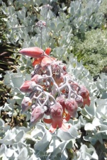 19 Flower