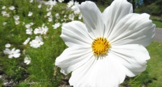 20 Flowers