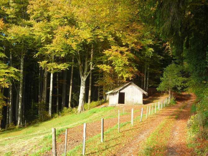 21 Autumn scene, Mont Pèlerin