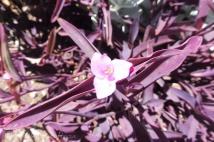 22 Flower
