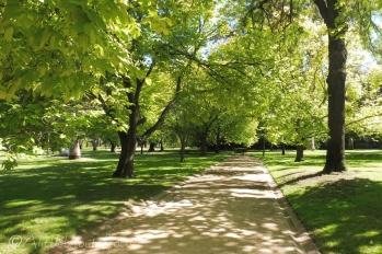 6 Park view