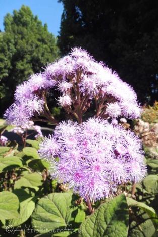 8 Flower