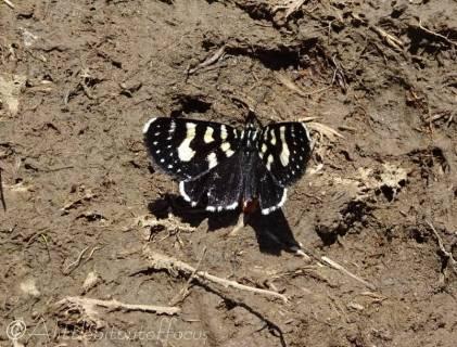 10 Butterfly