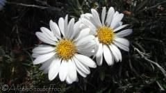 13 Flowers