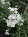 14 Flower