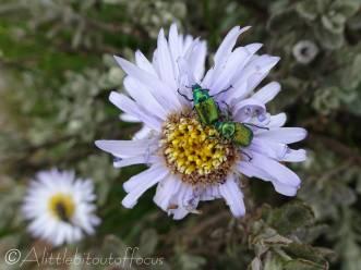 18 Beetles