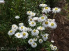 19 Flowers