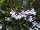 24 Flowers