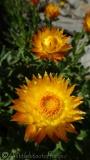 29 Flower