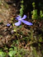 9 Flower