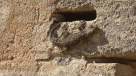 1 Brown lizard