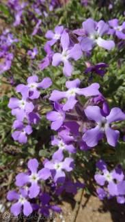 10 Purple flowers