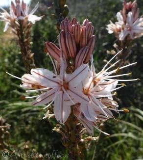 12 Interesting flowers