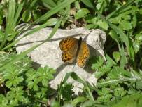 12 Wall Brown (I think)
