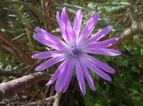 3 Nice flower