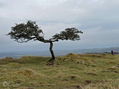31 Lone tree