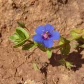 6 Blue flower