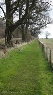 8 Grassy path