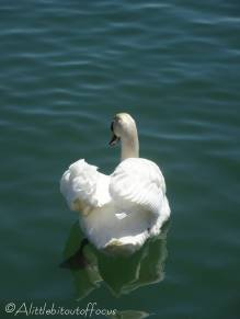13 Swan