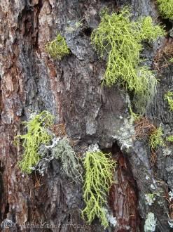 14 Lichen