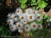14 Unknown plant