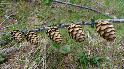 15 Cones