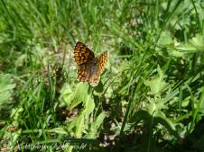 19 Duke of Burgundy