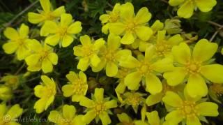 20 Unknown yellow flower