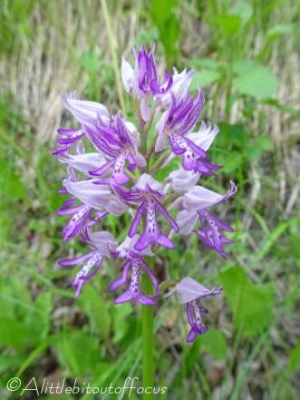 38 Unknown flower