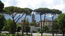 10 Trees
