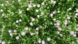 11 Nice flowers