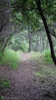 12 Path