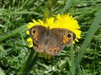 18 Wall Brown