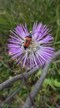 23 Bug 3