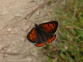 25 Small Copper