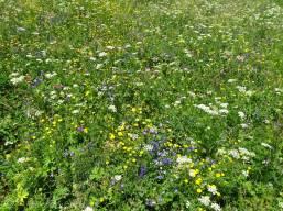 6 Alpine Meadow