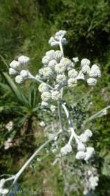 7 Strange white plant