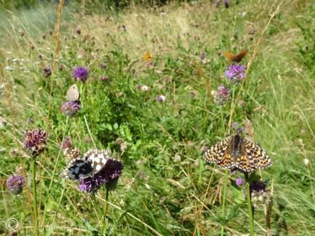 1 Butterflies